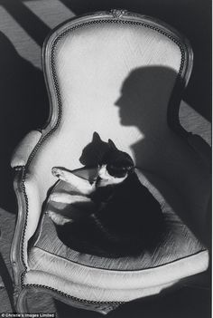 Cat Ulysses and Martine's shadow - 1988
