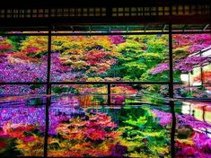 Ruriko-in Temple Kyoto Japan by Yuya Oishi Positive vibes. Beautiful Places To Visit, Beautiful World, Beautiful Gardens, Aesthetic Japan, Japanese Landscape, Japan Photo, Colorful Trees, Japan Art, Great View