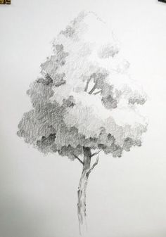 NAMIL ART: [drawing step by step] Drawing a Hardwood Tree Basic Pencil drawing Easy Pencil Drawings, Landscape Pencil Drawings, Landscape Sketch, Cool Art Drawings, Art Drawings Sketches, Art Illustrations, Nature Drawing, Plant Drawing, Painting & Drawing
