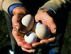 Hands with egg by JFlemming, via Flickr