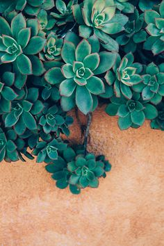 Instant Download Photography Download Succulent Photography