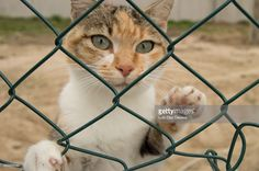 Sad cat behind a fence, watching what happens on the other side.