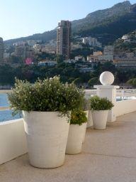 Pot Cycas Lisse H80 Terre Blanche