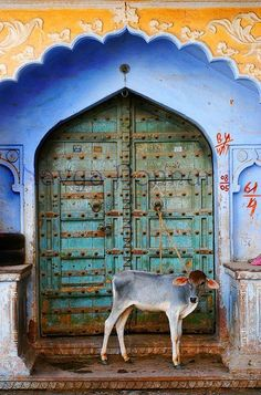 ॐ Pushkar, Rajasthan, India- Hindu  Architecture Door 卐 - Hinduism     As an animal lover, it was hard to see how some animals were held in India