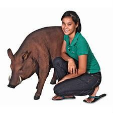 Woodland Animal Garden Statues - Deer, Rabbit & Fox Garden Statues - Design Toscano Feral Pig, Used Baby Clothes, Woo Pig Sooie, Crushed Stone, Designer Baby Clothes, Learn To Swim, Design Fields, Animal Statues, Wild Boar