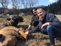 Bei uns in der Edermühle in Bad Großpertholz hast Du die einmalige Gelegenheit ein Schwein zu knuddeln, streicheln oder einfach nur zu beobachten. Zu jeder Jahreszeit und beinahe bei jedem Wetter ist es ein unglaublich faszinierendes und bewegendes Erlebnis. #kunekune #schwein #schweingehabt #edermühle #waldviertel Cow, Animals, Cuddle, Pork, Weather, Seasons Of The Year, Woodland Forest, Cats, Animales