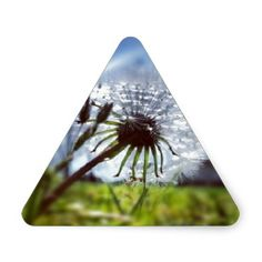 Dandelion (Photography) Triangle Stickers