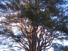 Tree of Light, Ashford, County Wicklow by Charity Amy Murphy