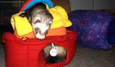 Ferret shelters and rescues across the nation have relied on Support Our Shelters in times of need, but will SOS survive the future?