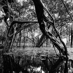 Apuí, Paranã do São Raimundo, River Juruá, AM, 2011 by Edu Simões