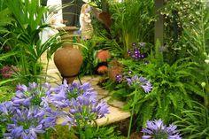 Agapanthus in garden