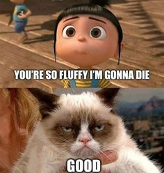 Grumpy cat makes me feel good! But he says it hurts his feelings cause he is the opposite of optimism!!!!!!