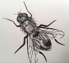 Pointillism, Ink Illustrations, Stippling, Natural Forms, Future Tattoos, Animal Tattoos, Bugs, Sketches, Bug Insect