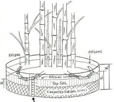 rhizome barrier - Google Search