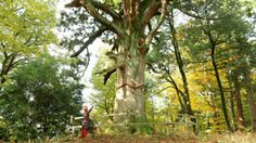 Mito: Gardens, tradition and spring blossoms - Journeys in Japan - TV - NHK WORLD - English