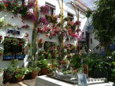 Patio Calle Chaparro.Cordoba