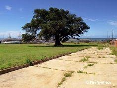 Symbol of Soul Port Elizabeth, Fig Tree, Sidewalk, Museum, Heart, Ficus, Side Walkway, Ficus Tree, Walkway