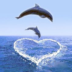 Dolphins love us