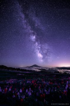 The Milky Way and millions of other stars above Mt Adams and a field of lupine and paintbrush. Goat Rocks Wilderness, Washington, August 2012.    This is another image from our recent 4 day backpacking trip in the Goat Rocks. This was the only clear night while we were out and I took full advantage of the conditions. To me it seemed like the wildflowers were all looking up and admiring the stars just like I was while creating this image.    Taken August 22nd 2012  Copyright : Scott Smorra