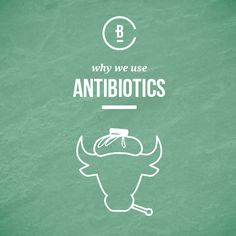 Learn why antibiotics are used to treat cattle. Cattle, Being Used, No Worries, How To Become, Learning, Health, Gado Gado, Health Care, Studying