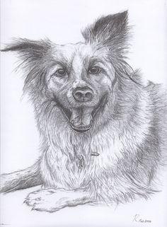 Fine Art - Pencil illustrations of animals/wildlife by Tamalia Reeves-Pyke, via Behance