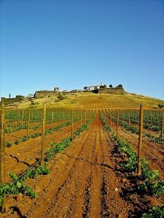 Estremoz - Alentejo Portugal Visit Portugal, New Journey, Wineries, Algarve, Wine Country, Abandoned Places, Terra, Wine Tasting, Portuguese