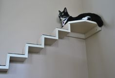kitty stair case  http://jacksongalaxy.com/2012/07/17/catification-diy-mini-cat-staircase/#