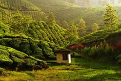 This Kerala tour package provides diff shades of the Gods own town starting from Munnar which is a Hill station and famous for tea gardens, Thekkaddy is famous for periyar , Alleppey is famous for Backwater and last stop Munnar, Hill Station, Tourist Places, Lose 20 Pounds, World Heritage Sites, Solo Travel, The Good Place, Places To Visit, Around The Worlds