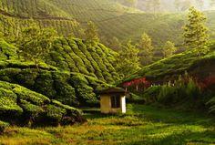 Munnar, Kerala | Hill stations of India