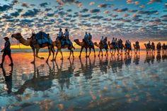 Beach Camels, Cable Beach, Australia