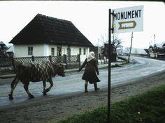 Romania 1984-1986 vazuta din ambasada SUA | Muzeul de Fotografie Bucharest, Socialism, Romania, 1980s, Cow, Horses, Mountains, Travel, Animals