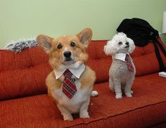 Business casual.