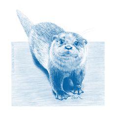 Digital Pencil Illustration. Flora And Fauna, Pencil Illustration, Otters, Digital Art, Watercolor, Pen And Wash, Watercolor Painting, Otter, Watercolour