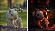 Badass Squirrel Gets Photoshopped In Hilarious Contest