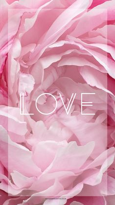 Free Peony Love iPhone Wallpaper http://www.dannisawthis.co.uk/iphone-wallpapers-free-downloads-3/
