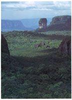 Domos, torretas y cerros tubulares  característicos de la serranía de Chiribiquete.  Fotógrafo: Andrés Hurtado García