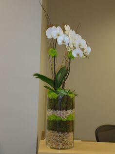18 best signature orchid arrangements images orchid plants orchid rh pinterest com