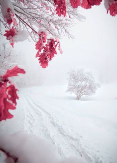 Good Vibes Meaning White Photography, Nature Photography, Good Vibes Meaning, Pink Nature, Tumblr, Snow Scenes, Psychedelic Art, Winter Is Coming, Winter White