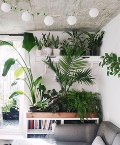 Pinned by apothecaryteaandgallery  #indoorplants #plantstyling