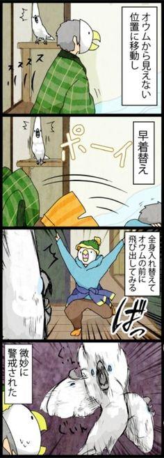 漫画「いたずらオウムの生活雑記」 (178) 微妙に警戒 | ライフスタイル | マイナビニュース