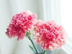 altijd fijn in huis: bloempies