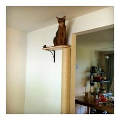 Cat Tree Climbing Pole Sisal Rope Cat Scratching Post | Etsy Cat Climbing Wall, Cat Wall Furniture, Furniture Ideas, Tube Carton, Diy Cat Tree, Cat Trees Diy Easy, Wood Cat, Cat Shelves, Sisal Rope