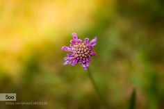 Litle pink flower by mathieuploton - Pinned by Mak Khalaf