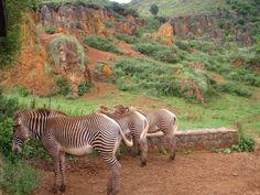 Parque de la naturaleza de Cabárceno, Cantabria, Spain First Doctor, First Health, Our World, Places To See, Cute Animals, Voyage, Parks, Naturaleza, Animales