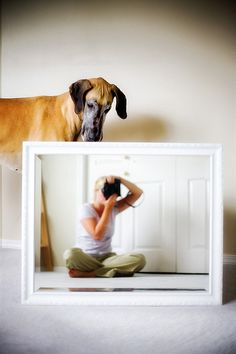 I just love this #great #dane #dog #photography #ideas