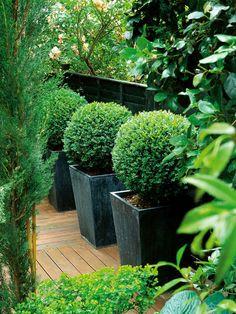 Clipped Boxwoods Featured in Metal Pots --> http://www.hgtvgardens.com/photos/gardens-photos/pot-pourri-garden-pots-and-container-gardens?soc=pinterest
