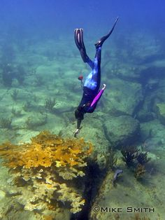 Coastal Southeast Florida Hope Spot: A Community in Action. 12 June 2017  By: Angela Smith, Shark Team One    For a number of years, I have worked with key stakeholders as well as educational and governmental groups on recommended management actions (RMAs) that propose an integrated approach for ecosystem and coral reef protection for the Southeast Florida region. The Hope Spot nomination in part was inspired by a particular action plan calling for no-take zones within a marine protected…