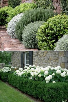 75 Fresh Beautiful Spring Garden Landscaping for Front Yard and Backyard Ideas - Wholehomekover - Garden Care, Garden Design and Gardening Supplies Garden Shrubs, Garden Paths, Boxwood Garden, Flowering Shrubs, Boxwood Hedge, Garden Borders, Back Gardens, Outdoor Gardens, Indoor Garden