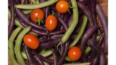 The Charm of Growing Beans - Ohio Farm Bureau Growing Beans, Types Of Beans, Green Beans And Tomatoes, Gardening Tips, Vegetable Gardening, Eggplant, Ohio, Flora, Tasty