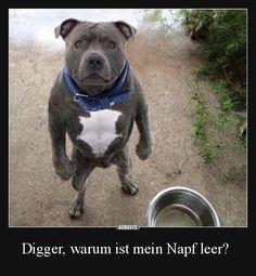 Digger, warum ist mein Napf leer?   Lustige Bilder, Sprüche, Witze, echt lustig